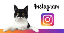 instagram-gonyazou