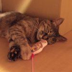 幸せ掴んだ保護猫ヨリちゃん