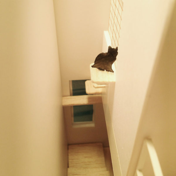 中庭で猫が遊ぶ家-猫階段