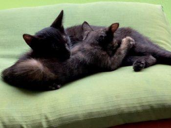 お兄ちゃん大好き子猫