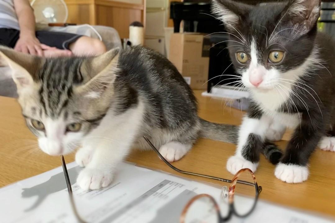 お施主さま宅の猫ちゃん
